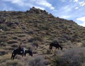 Erin, riding the High Desert on another day.