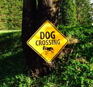 Crossing Dog